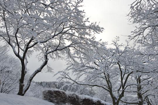 雪の候(3)_c0093046_195375.jpg
