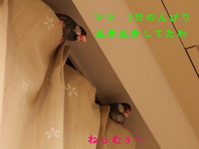 b0158061_21511368.jpg