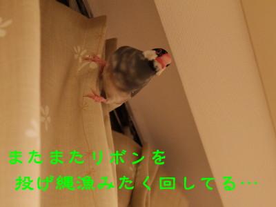 b0158061_21513571.jpg