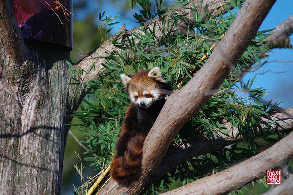 京都市立動物園・冬_a0157263_2323847.jpg