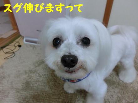 b0193480_160910.jpg