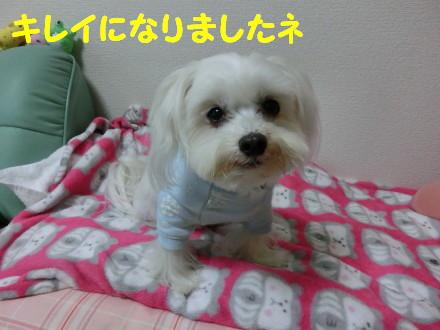 b0193480_16102945.jpg