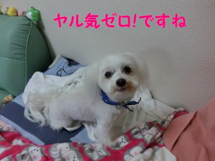 b0193480_1615929.jpg