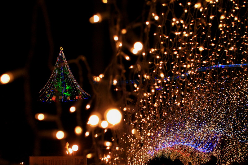 Merry Christmas_c0247982_10455467.jpg