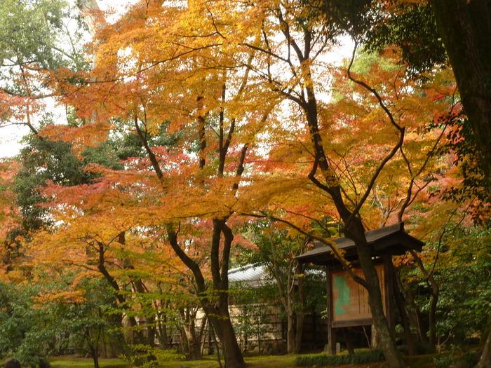 晩秋の京都 24_b0093088_1025668.jpg