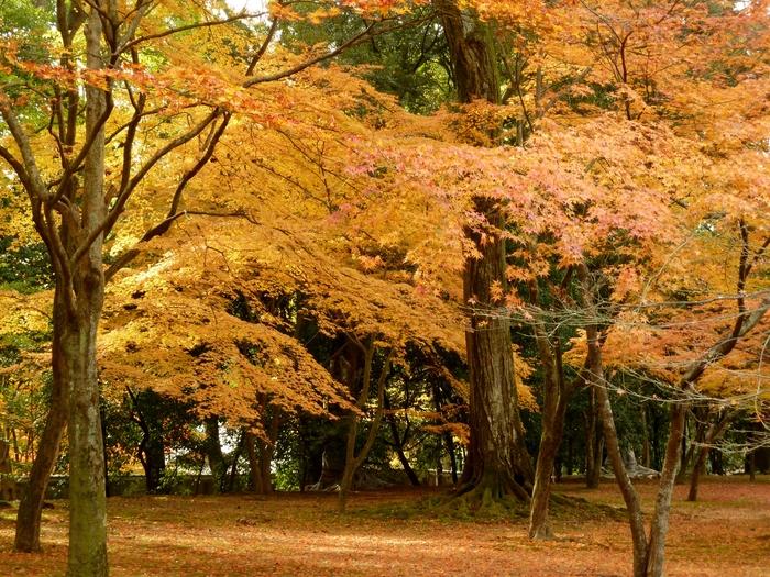晩秋の京都 24_b0093088_1044716.jpg