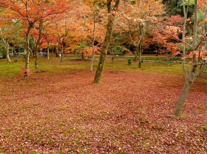 晩秋の京都 24_b0093088_1055584.jpg