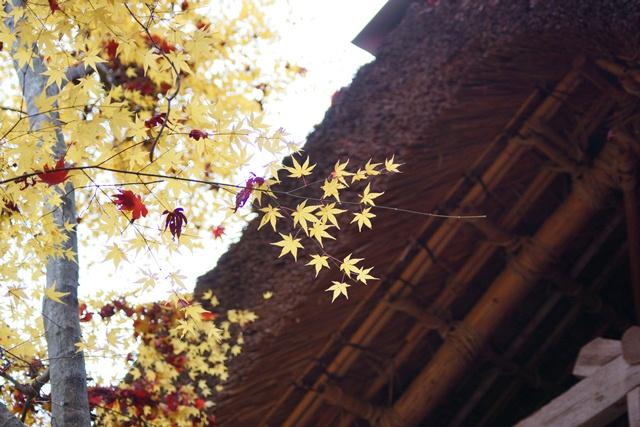 日本一の紅葉 教林坊、戦争は嫌 日本の真の武器、TPP参加が日本の繁栄、阪急うめだの素敵なメルヘン④_d0181492_1616412.jpg