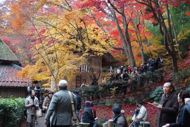 日本一の紅葉 教林坊、戦争は嫌 日本の真の武器、TPP参加が日本の繁栄、阪急うめだの素敵なメルヘン④_d0181492_16165171.jpg