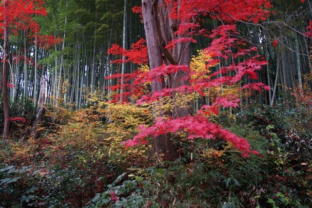 日本一の紅葉 教林坊、戦争は嫌 日本の真の武器、TPP参加が日本の繁栄、阪急うめだの素敵なメルヘン④_d0181492_16174862.jpg
