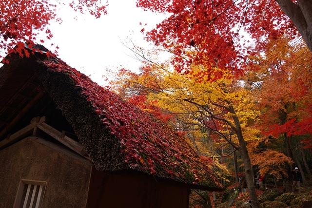 日本一の紅葉 教林坊、戦争は嫌 日本の真の武器、TPP参加が日本の繁栄、阪急うめだの素敵なメルヘン④_d0181492_16212189.jpg