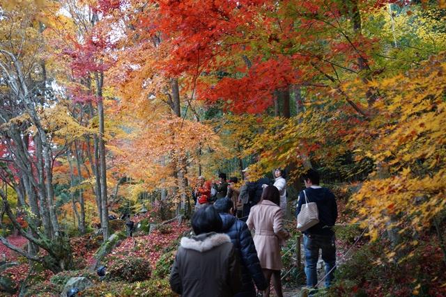 日本一の紅葉 教林坊、戦争は嫌 日本の真の武器、TPP参加が日本の繁栄、阪急うめだの素敵なメルヘン④_d0181492_16213648.jpg