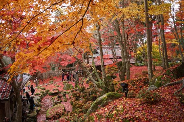 日本一の紅葉 教林坊、戦争は嫌 日本の真の武器、TPP参加が日本の繁栄、阪急うめだの素敵なメルヘン④_d0181492_16221449.jpg