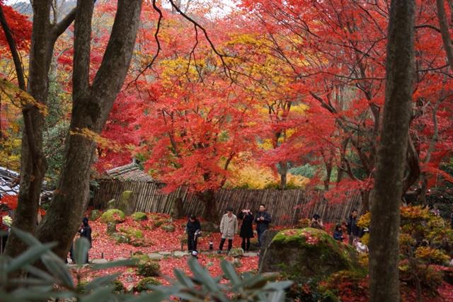日本一の紅葉 教林坊、戦争は嫌 日本の真の武器、TPP参加が日本の繁栄、阪急うめだの素敵なメルヘン④_d0181492_16222881.jpg