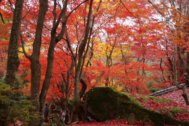 日本一の紅葉 教林坊、戦争は嫌 日本の真の武器、TPP参加が日本の繁栄、阪急うめだの素敵なメルヘン④_d0181492_16232613.jpg