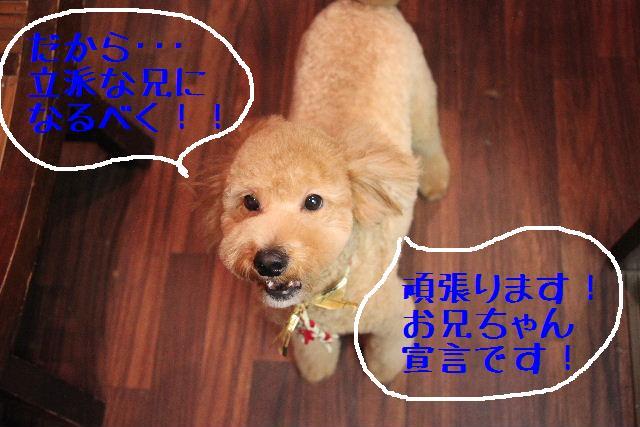 b0130018_035360.jpg