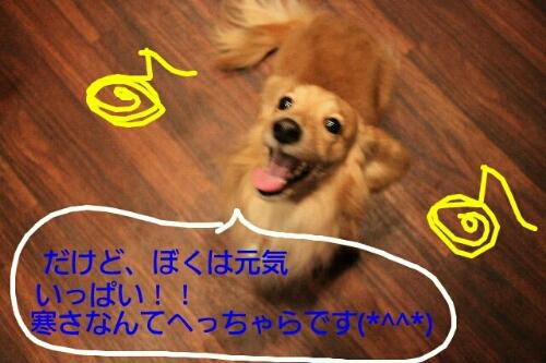 b0130018_8424630.jpg