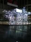 クリスマス前の南下_f0101128_1792236.jpg