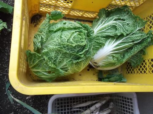 安くて効果的な野菜の食べ合わせ...Excite.Nes_b0137932_21573627.jpg