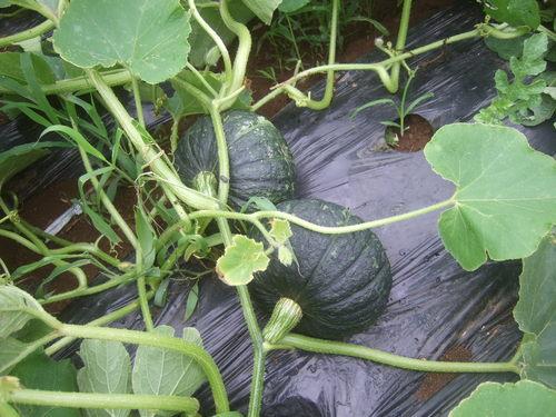 安くて効果的な野菜の食べ合わせ...Excite.Nes_b0137932_21592160.jpg