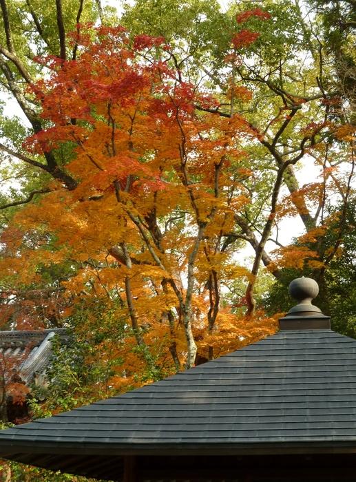 晩秋の京都 25_b0093088_9583443.jpg