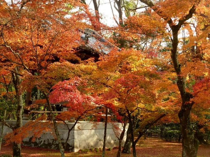 晩秋の京都 25_b0093088_958523.jpg