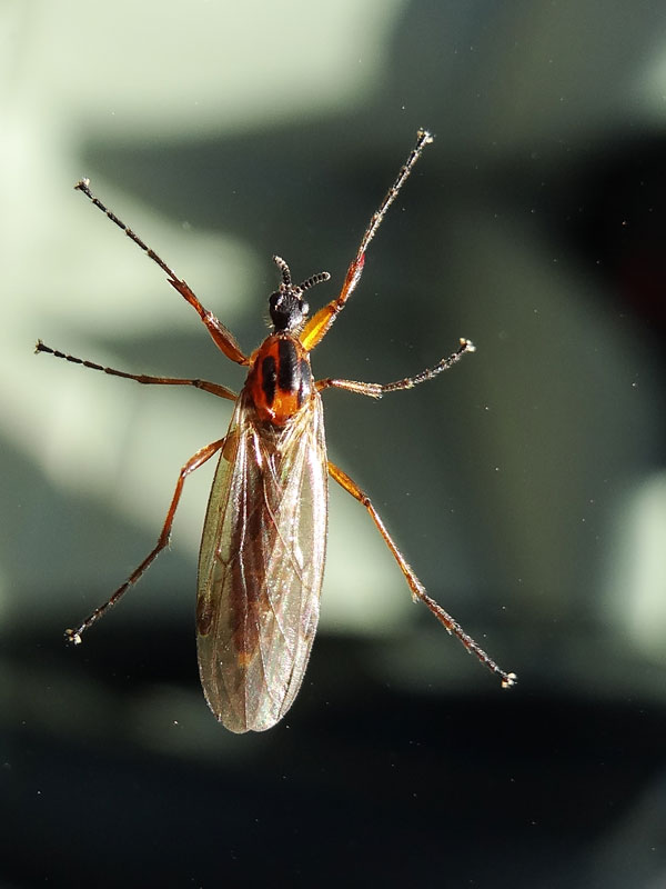 貼り付く力の強い虫 : 昆虫ブログ むし探検広場