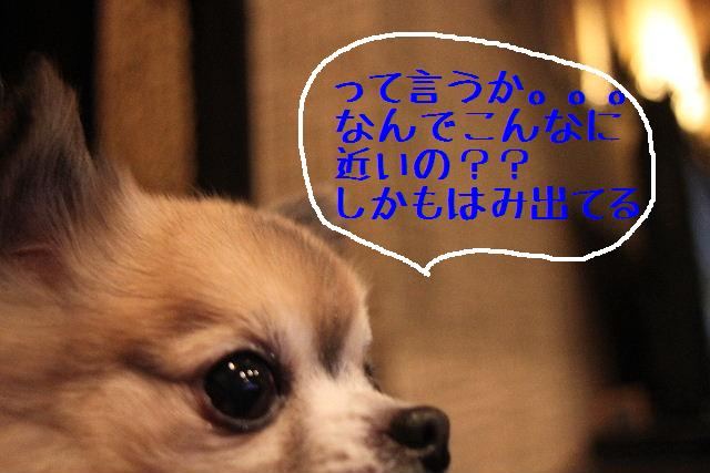 b0130018_2391098.jpg