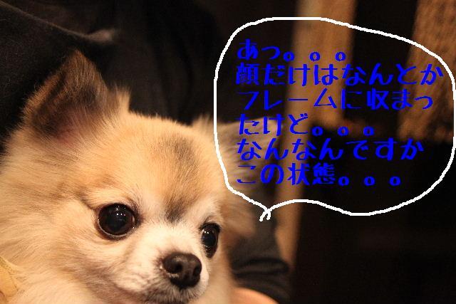 b0130018_2391818.jpg