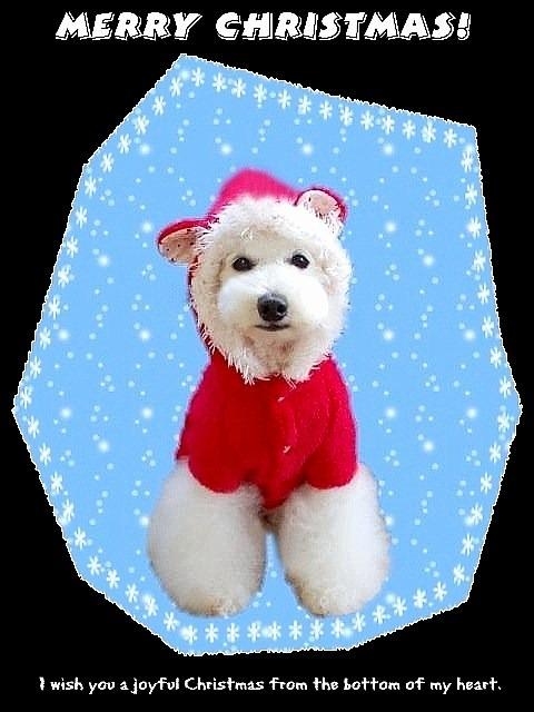 Merry Christmas**2012_d0083623_2442558.jpg