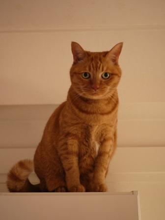 クリスマスイヴイヴ猫 しぇる編。_a0143140_18361047.jpg
