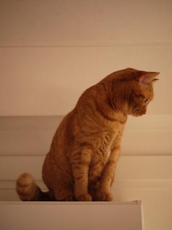 クリスマスイヴイヴ猫 しぇる編。_a0143140_1838325.jpg