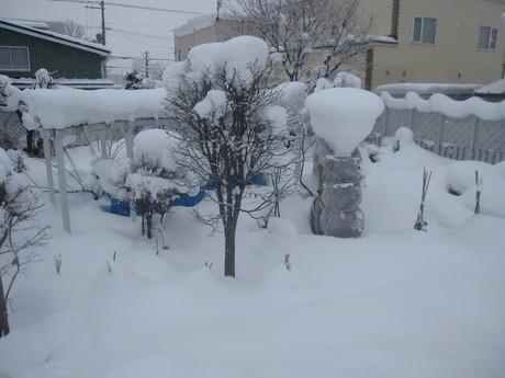 早くも凄い雪の庭とお家ご飯_a0279743_11362596.jpg