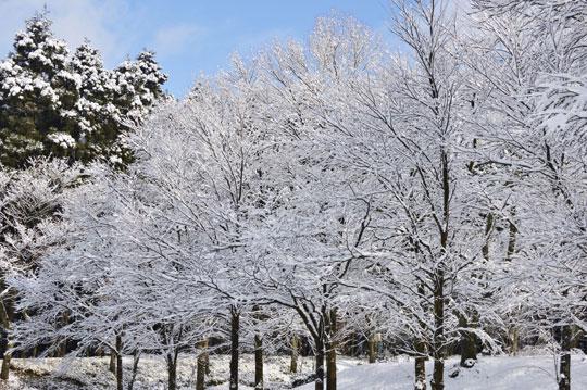 雪の候(4)_c0093046_9475030.jpg