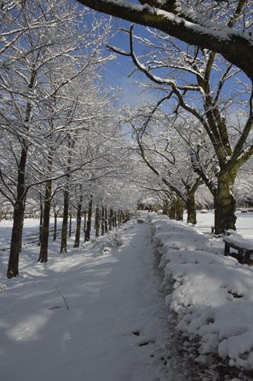 雪の候(4)_c0093046_9482341.jpg