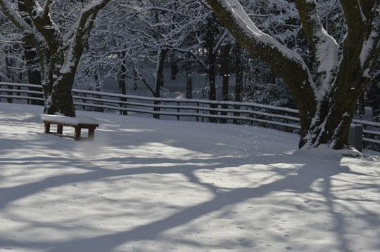 雪の候(4)_c0093046_9483925.jpg