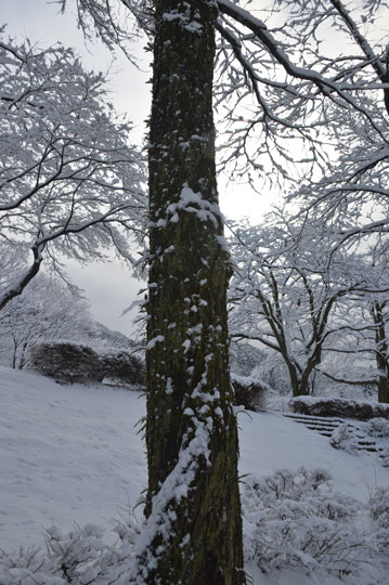 雪の候(4)_c0093046_948628.jpg