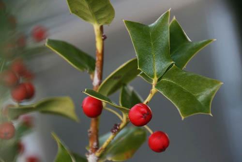 初めてのルリビタキと、クリスマスツリー_f0030085_2025558.jpg