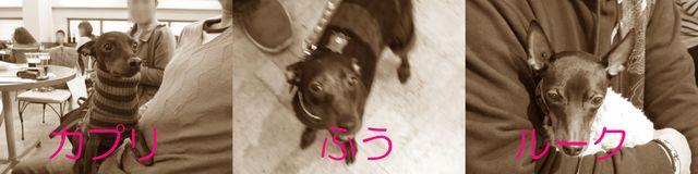 b0173802_18573149.jpg