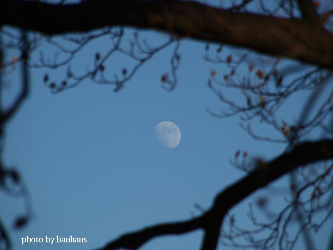 上弦の月_d0178215_23574617.jpg