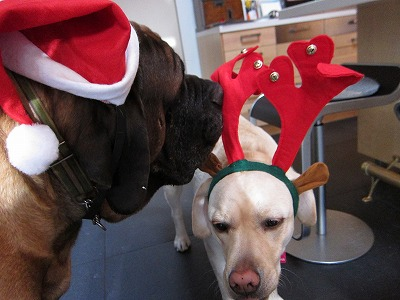 Merry Christmas !_e0192217_917266.jpg