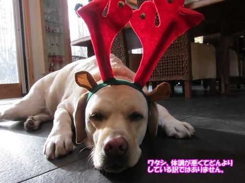 Merry Christmas !_e0192217_9311138.jpg