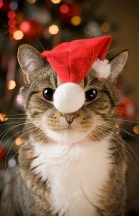 サンタがやって来た!_f0015517_23462793.jpg
