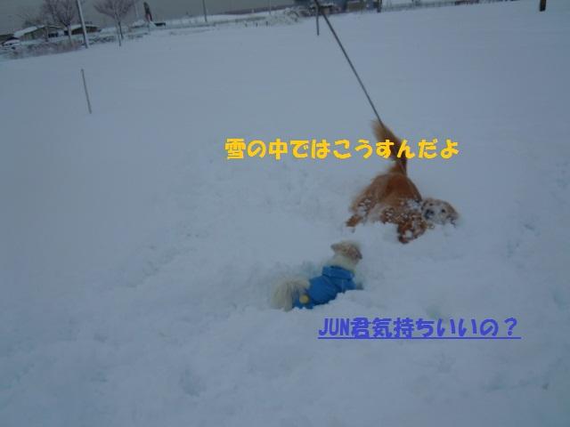f0114128_16575273.jpg