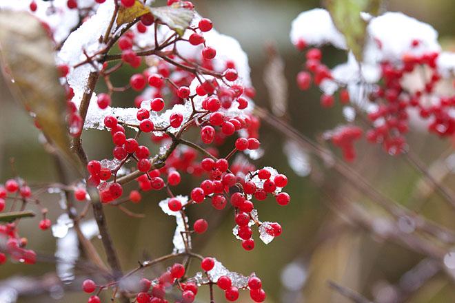 White Christmas_c0067040_22211743.jpg