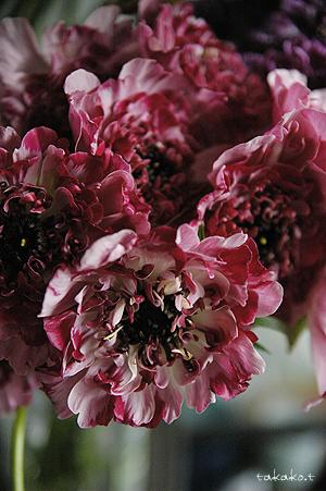 素敵な切花たち。_c0070460_17482051.jpg