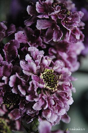 素敵な切花たち。_c0070460_1748307.jpg