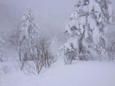 北海道4日目 ☆キロロスノーワールド_c0151965_11335466.jpg
