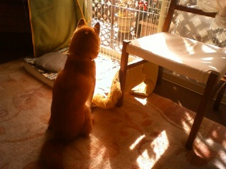 悩む犬_b0011075_20505566.jpg