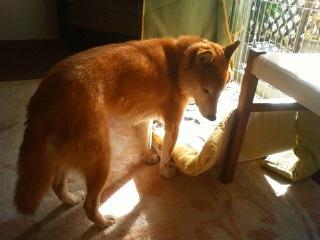 悩む犬_b0011075_20523116.jpg